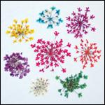 Exotic Dried Flowers - Fiji-Colour-Orange